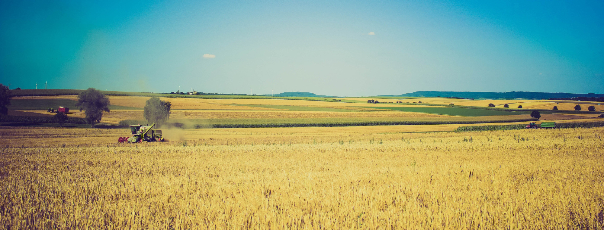 wheat-field-background